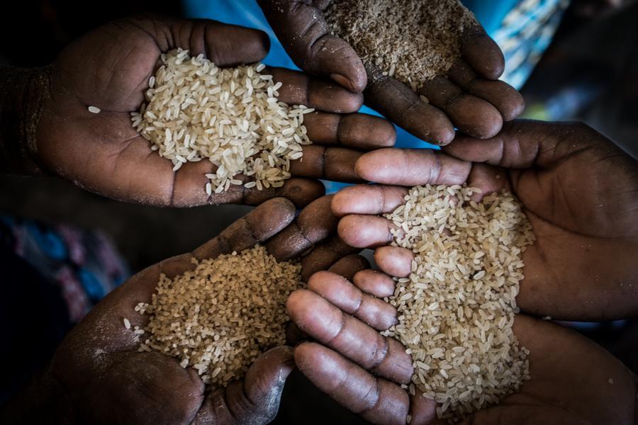 Accompagnement de la filière riz en favorisant des systèmes alimentaires plus durables et plus résilients au changement climatique