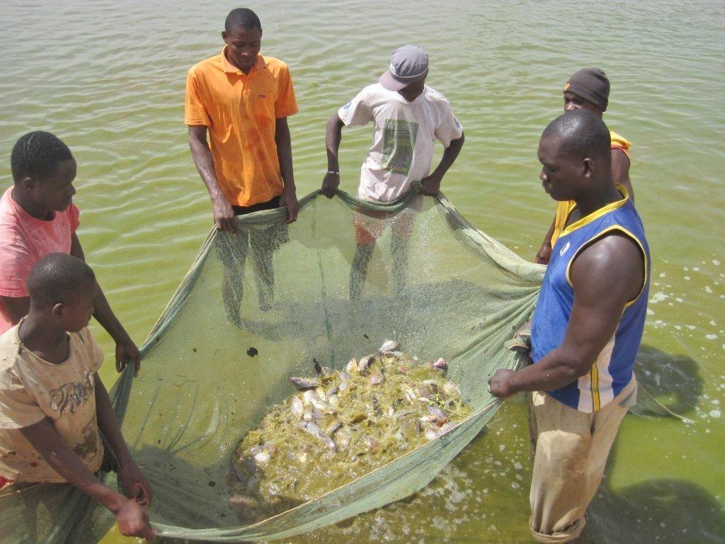 Programme d'appui à la filière halieutique au Mali