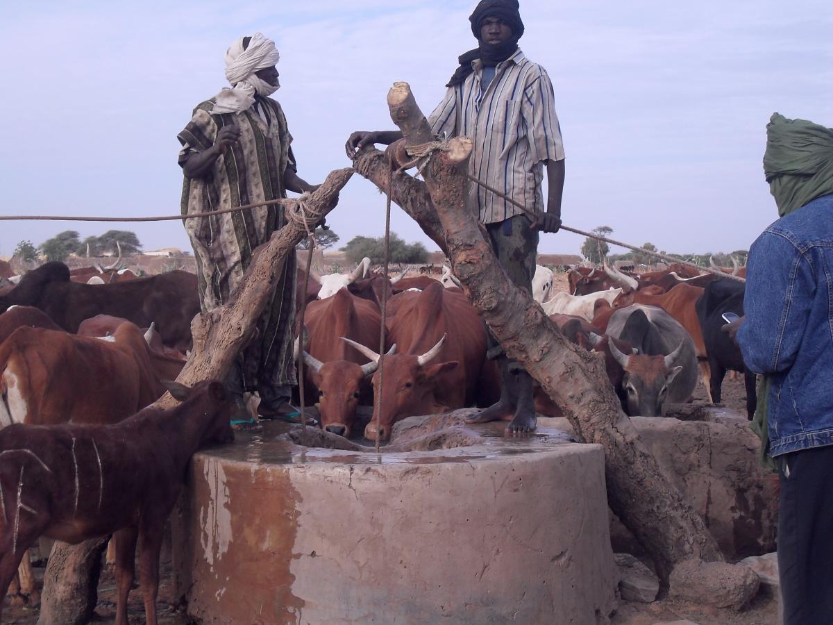 Appui au renforcement de l'Elevage et de l'économie pastorale au niveau de la Région de Koulikoro exécuté par la CTB