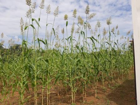 La lutte contre l'insécurité alimentaire et la malnutrition au niveau du Cercle de Nara (Koulikoro)