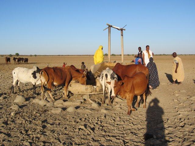 Promotion du développement de filières agricoles et pastorales durables