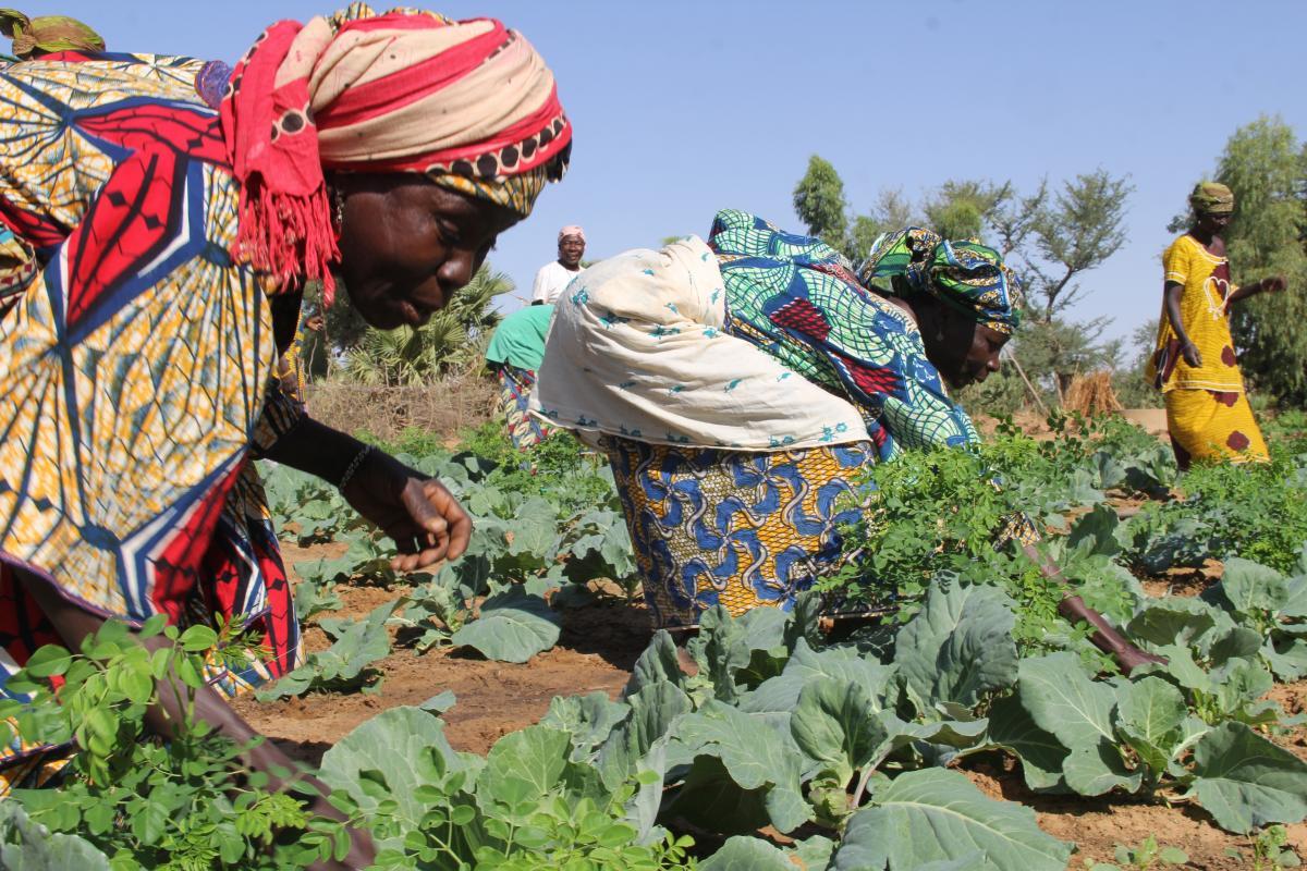 Programme d'appui à la mise en place des entités décentralisées dans la région de Dosso PAMED 2