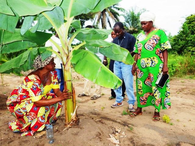 Programme de Développement agricole dans les districts du Kwilu et du Kwango (Bandundu) - PRODAKK