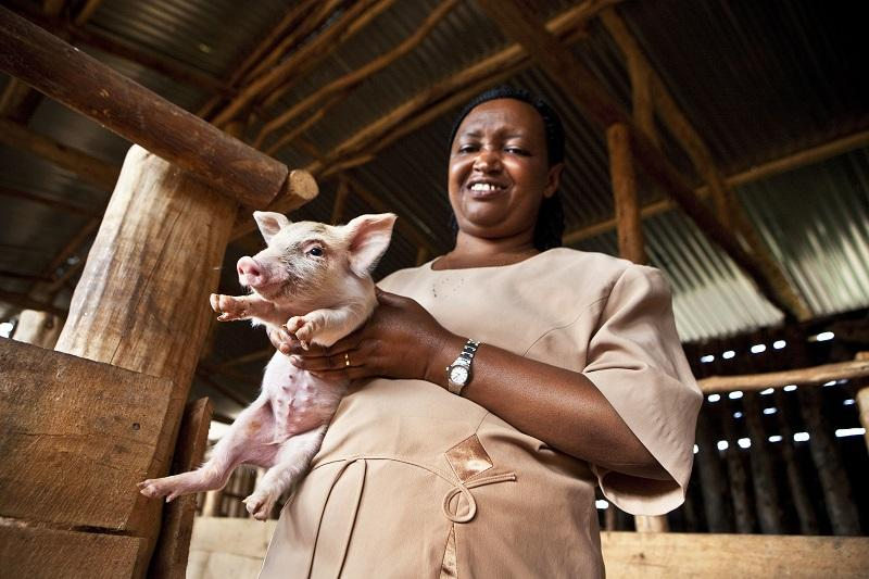 Inclusive and sustainable value chain development in the pig and poultry sector