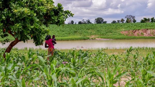 Projet d'Appui à la Réduction de l'Emigration rurale et à la Réintégration dans le Bassin Arachidier