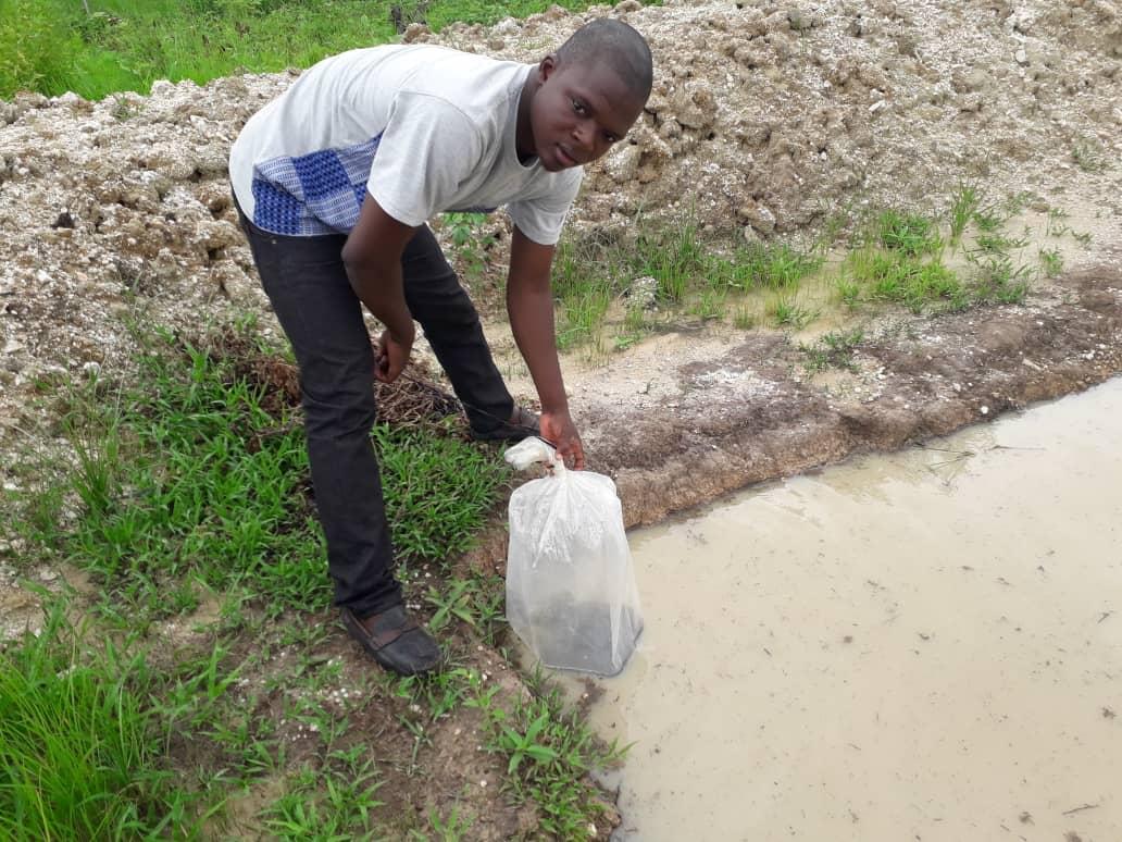 Des Alevins de Tilapia dans les étangs de Boukoumbé, Matéri et Cobly pour le bien-être des Populations