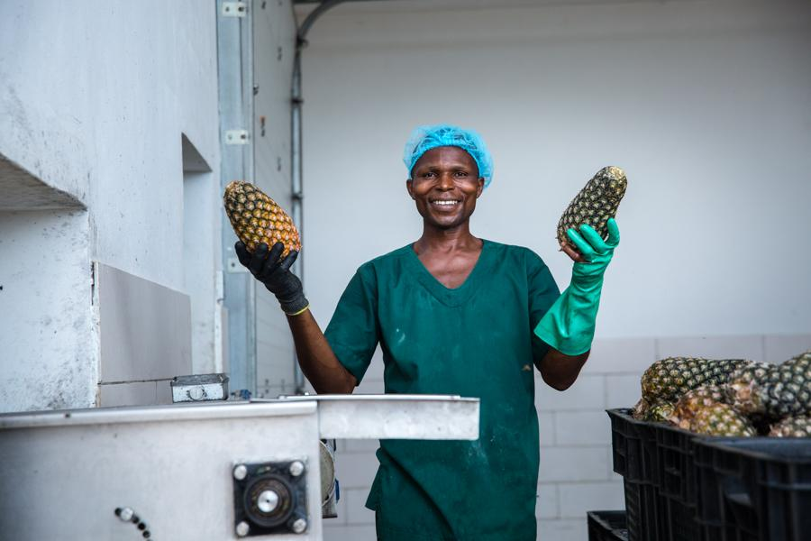 Développement de l'Entreprenariat dans la Filière Ananas (DEFIA)  88 coopératives et 35 producteurs bénéficient de la subvention de dessouchage, labou