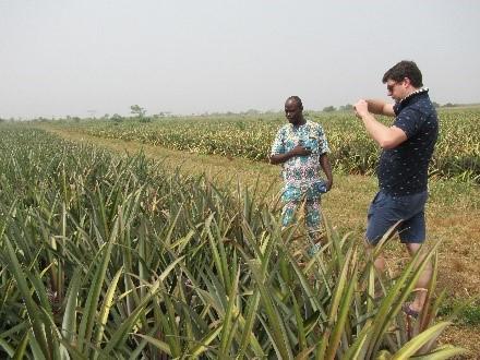 Top Harvest au Bénin pour explorer les possibilités d'importer en Belgique de l'ananas frais du Bénin