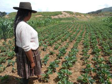 Community irrigation increases agricultural production in Bolivia