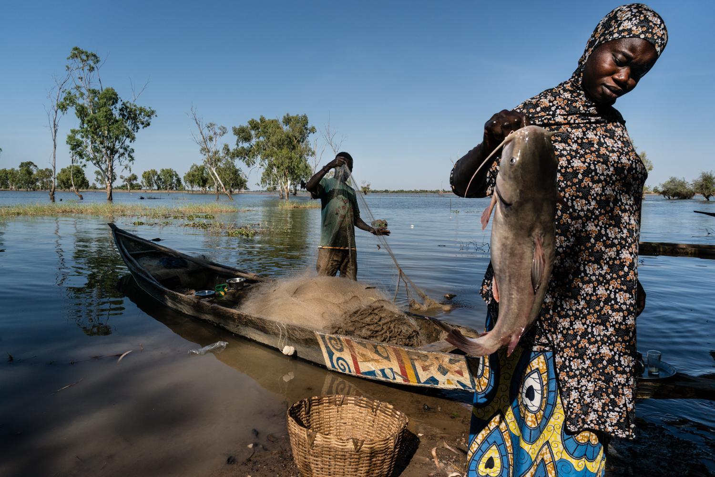 Appui à la filière Halieutique au Mali : des résultats prometteurs pour réduire l'insécurité alimentaire