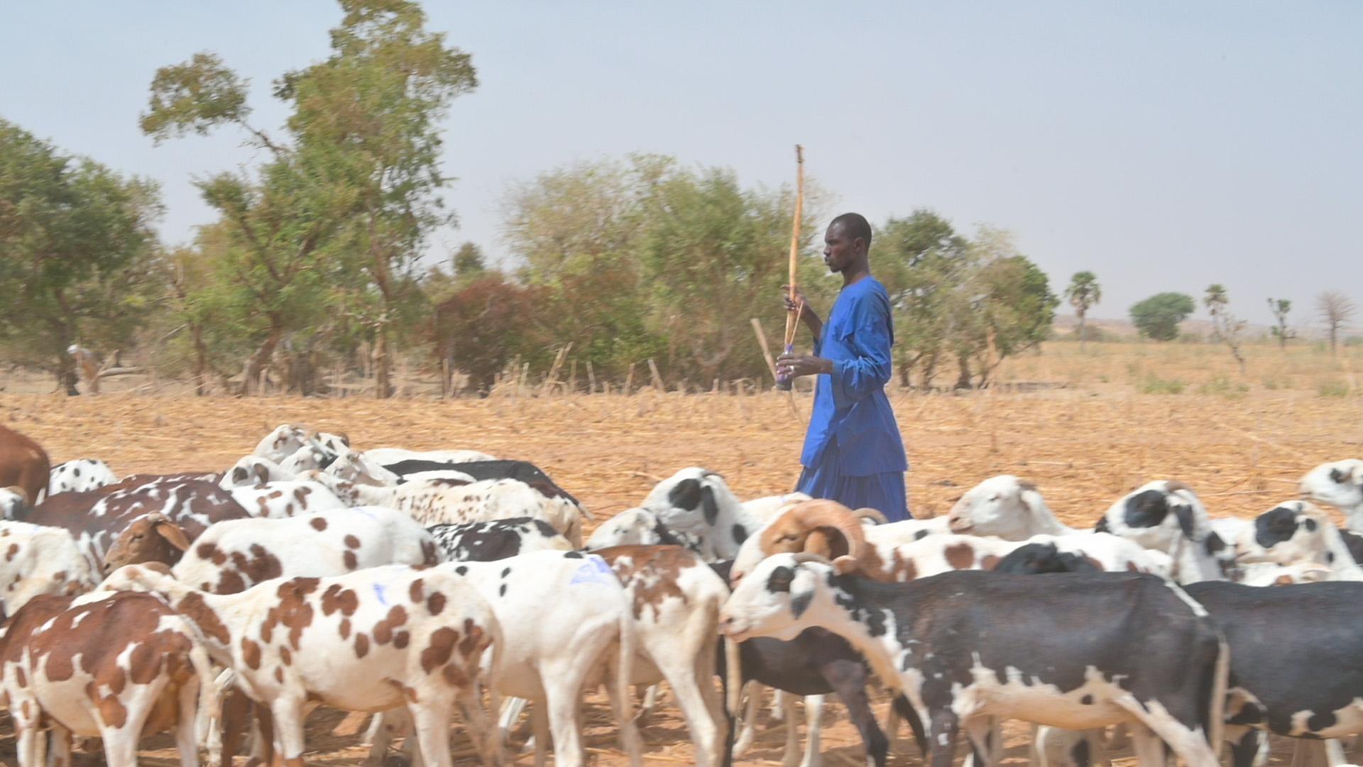 Au Mali, Enabel contribue à la sécurisation des périmètres pastoraux