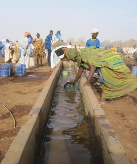 Périmètre Pastoral au Mali,  une réponse résiliente à la dégradation des conditions de vie des pasteurs dans le cercle de Nara