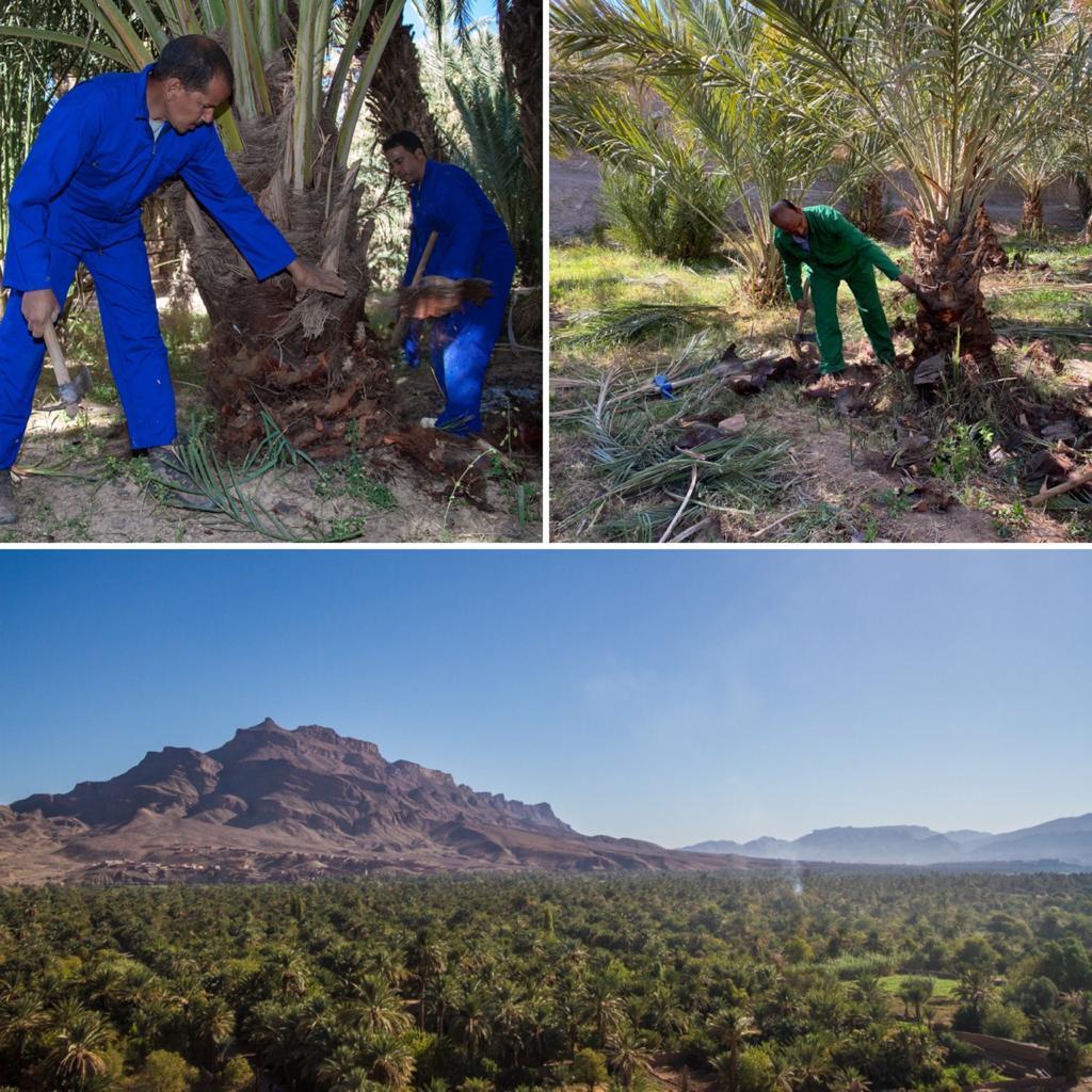 Un rempart naturel contre la désertification et le phénomène d'ensablement