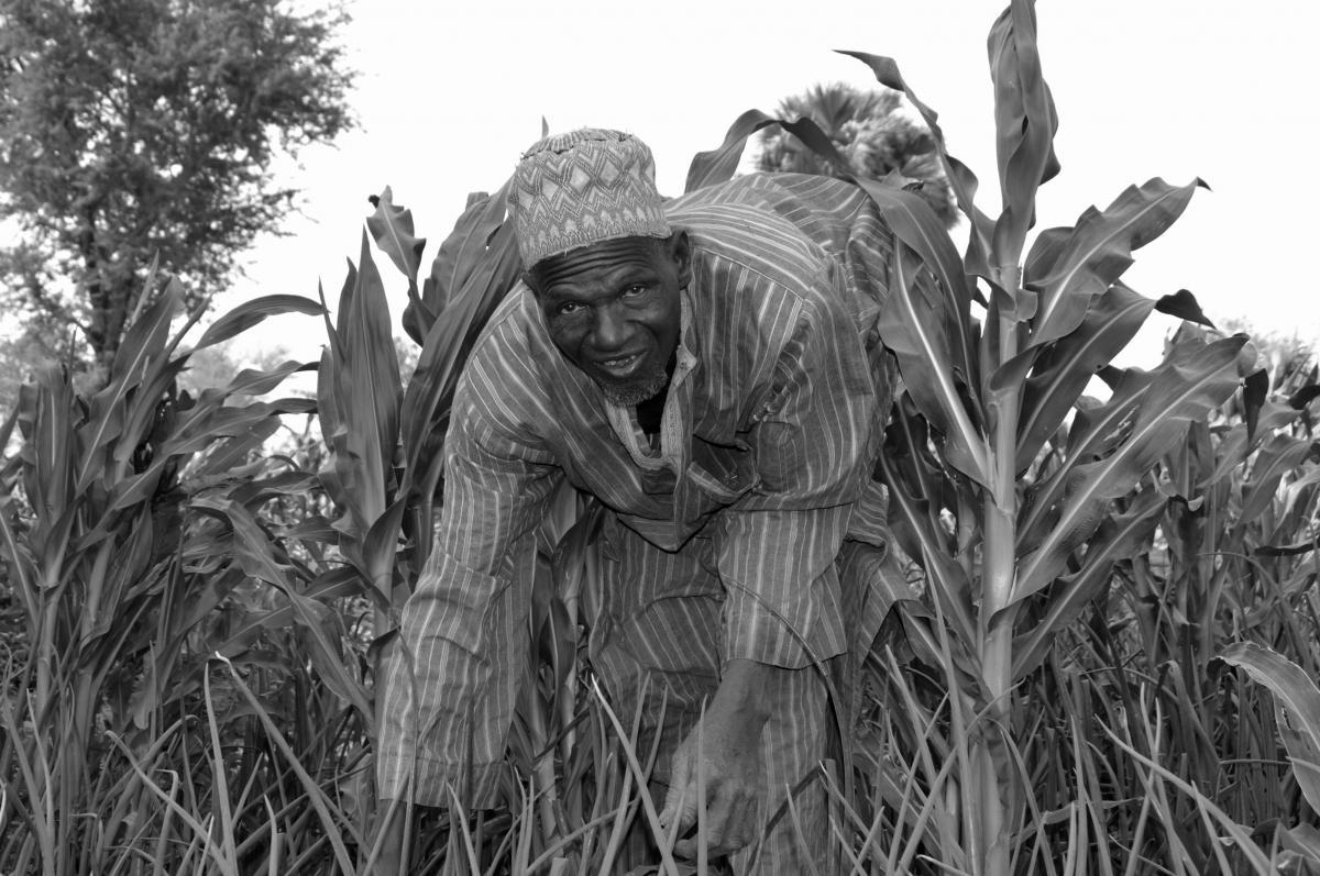 La saison de faim remplacée par une récolte d'abondance