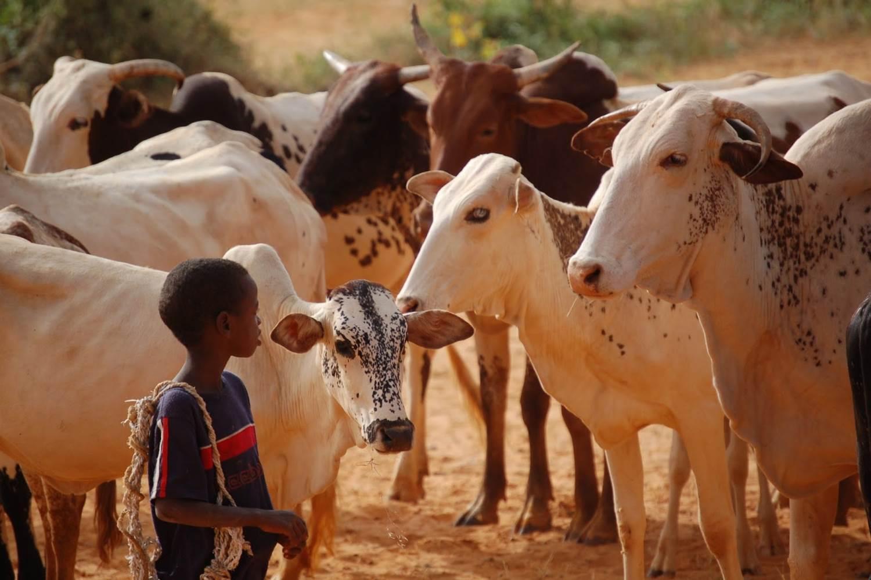 Le devenir du pastoralisme au Niger, Conférence-débat