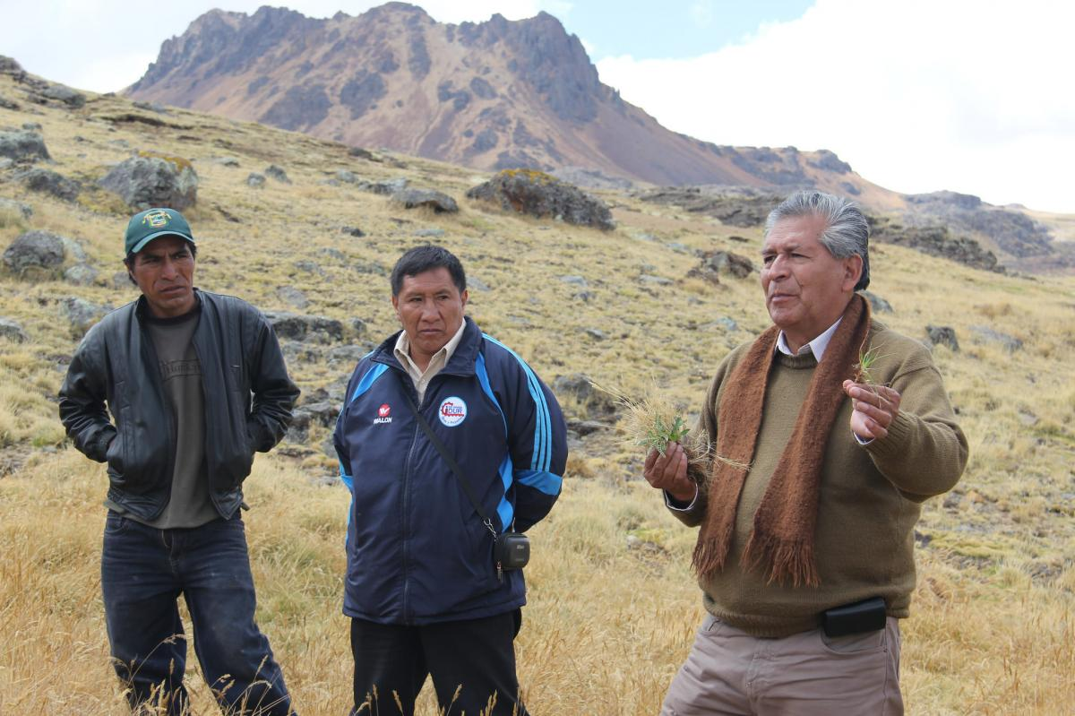"""Experiencia piloto: """"Recuperación del ecosistema pastizal y humedal altoandino, mediante prácticas adaptativas al cambio climático-comunidad de Pichq"""