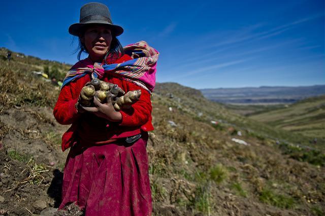 La Coopération belge participe au 10 ème Congrès International de la pomme de terre á Cusco – Pérou.