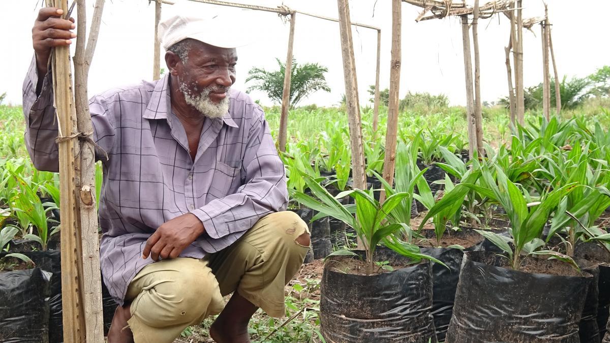 Le Kasaï Oriental et le Lomami, deux provinces productrices d'huile de palme demain?