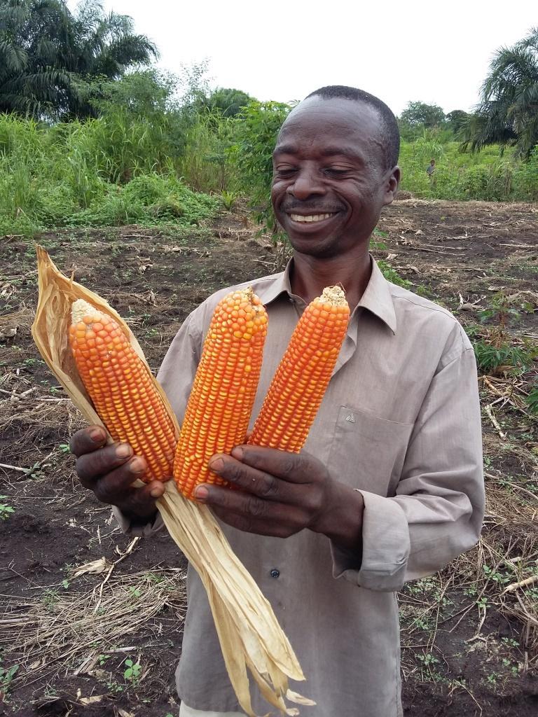 Des semences de qualité au Kasaï-Oriental et dans la Lomami