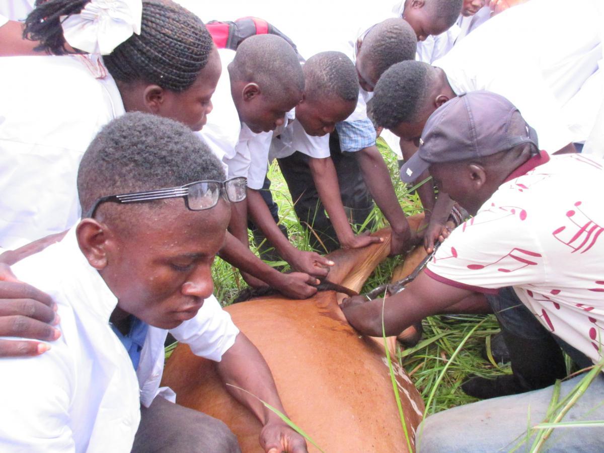 Le Projet Pilote de Formation en Alternance « PPFEA » : un outil bénéfique pour le territoire de Ngandajika