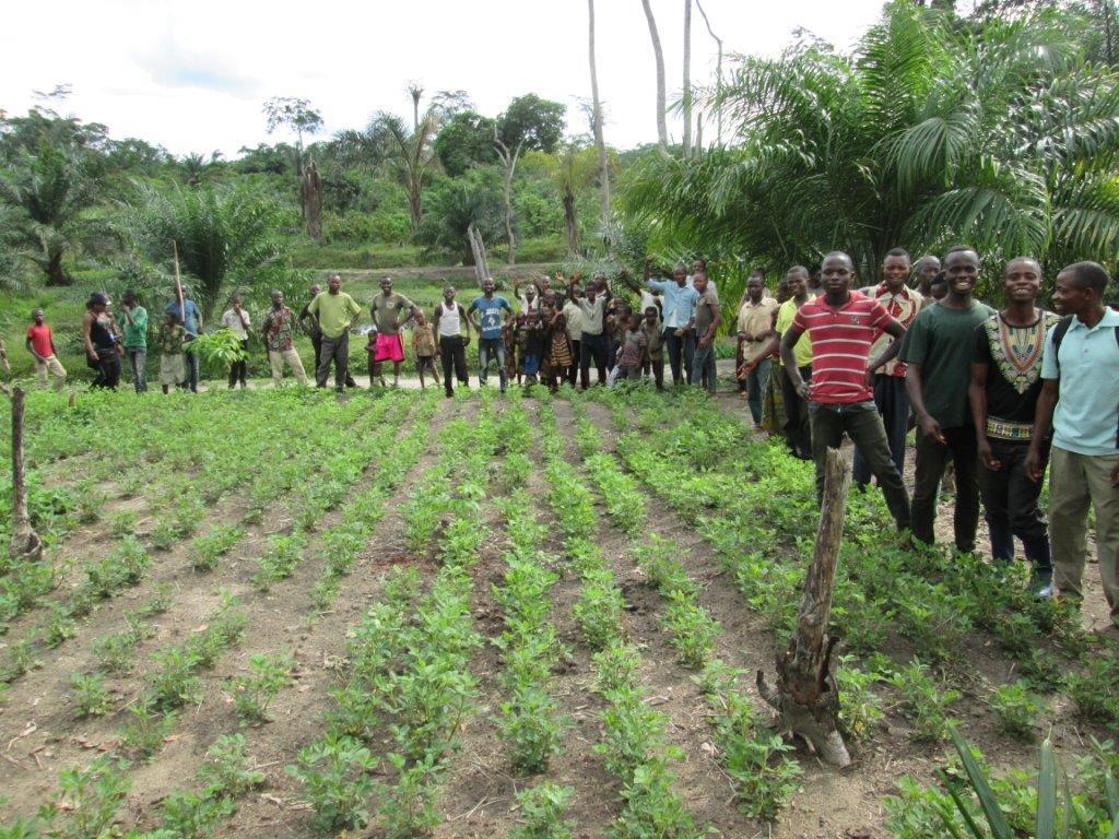 La production des sémences de qualité et le semis en ligne: deux objectifs indispensables pour l'activité agricole dans la Tshopo.