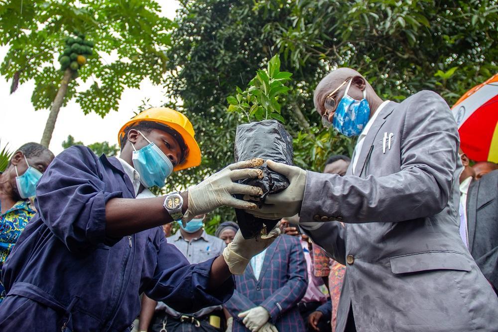 Journée Nationale de l'Arbre à la Tshopo : Célebrons la vie, Plantons des Arbres et Fêtons les arbres fruitiers!