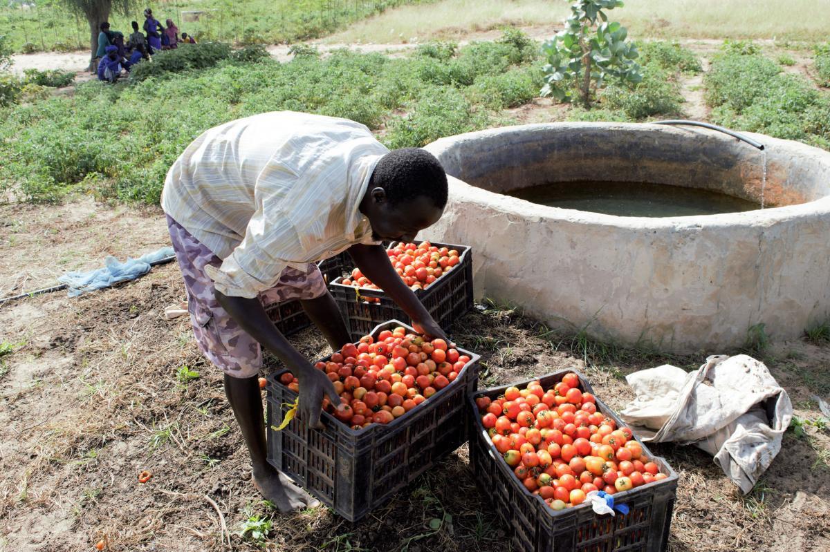 La création d'emplois durables dans les chaines de valeur agricoles pour réduire l'émigration rurale dans le bassin arachidier