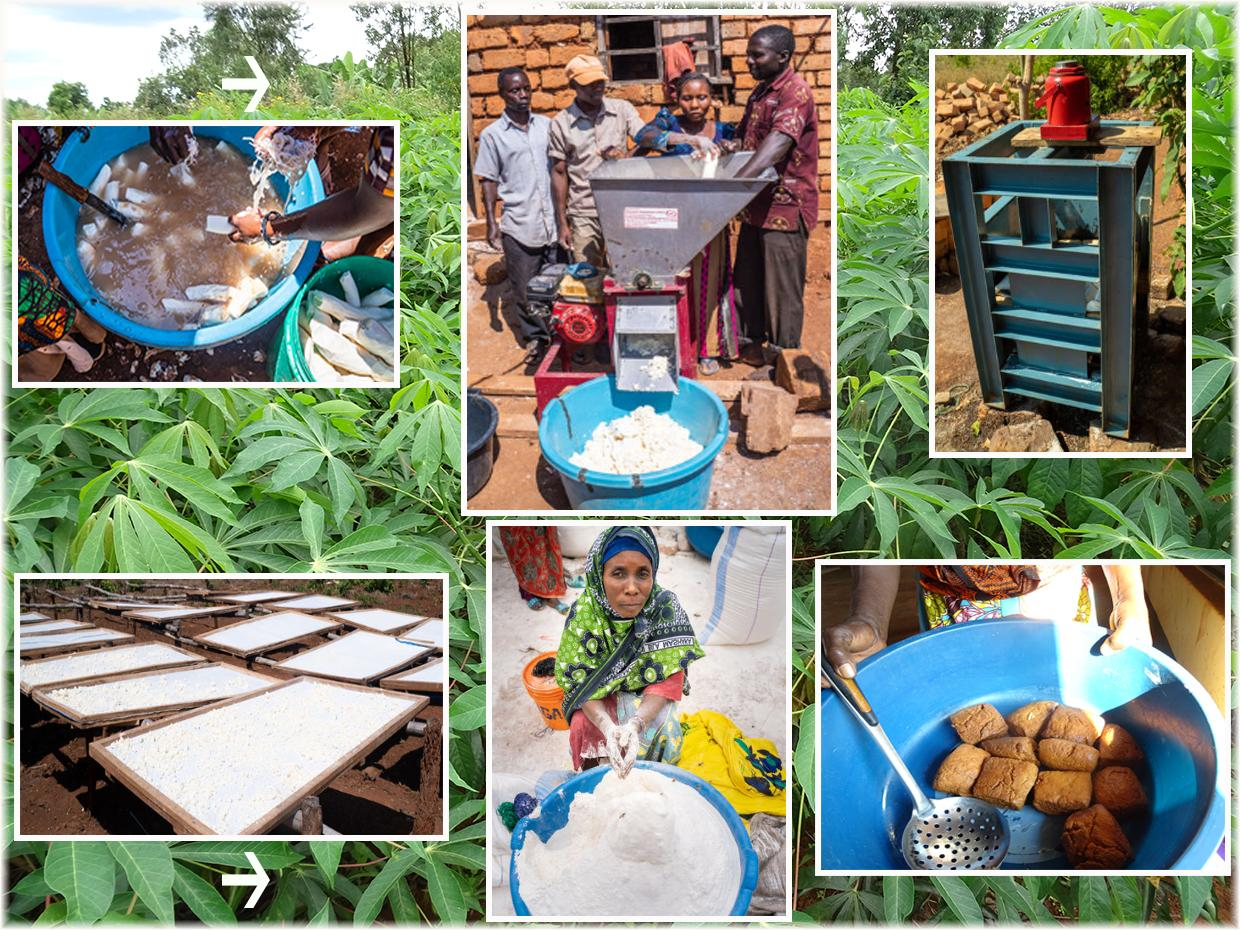 Cassava Improved Technologies