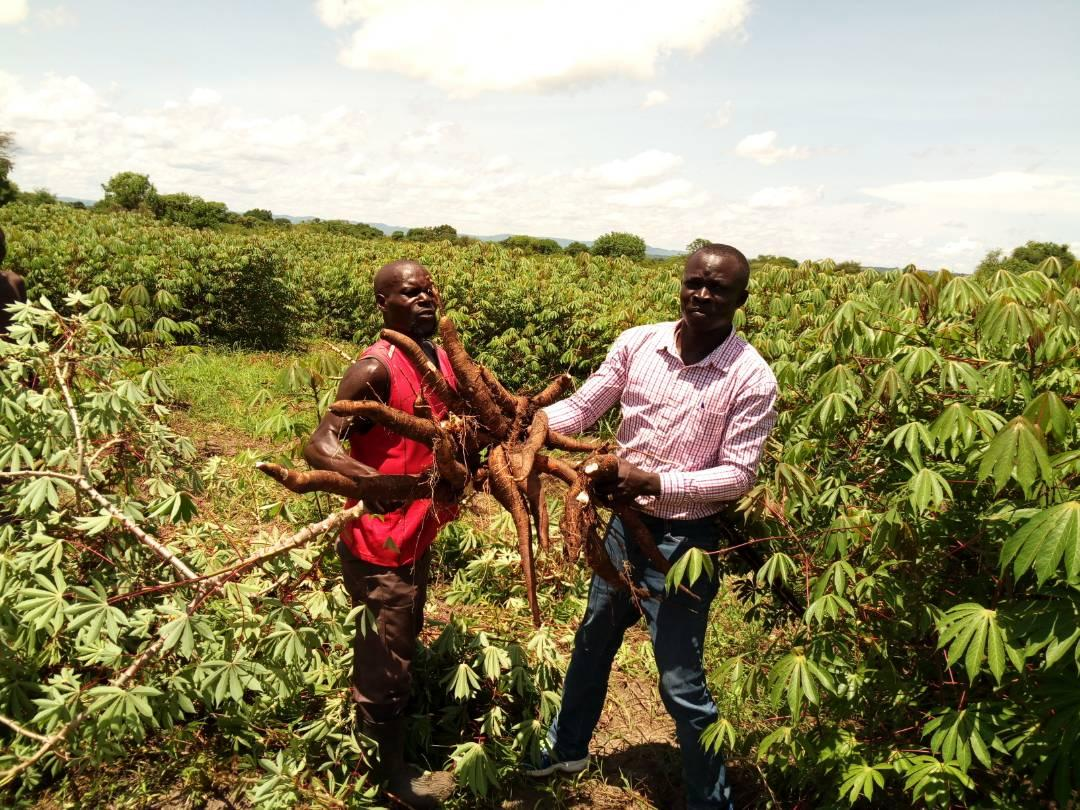 Agricultural training translates into multiple profits for rural farmer