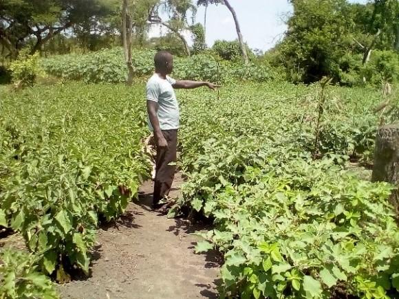 A young man's journey to an inspiring world through vegetable growing